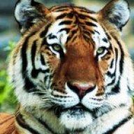 Tigerfreak21